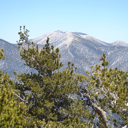 San Gorgonio from San Bernardino